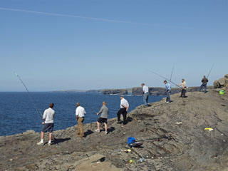 kalamehed, Cliffs of Kilkee, Clare
